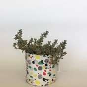 Upcycled planter – Limited Edition – Design print range – Dotty Bright – size S – Growbag